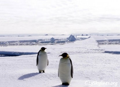 Antarctica skyline with penguins