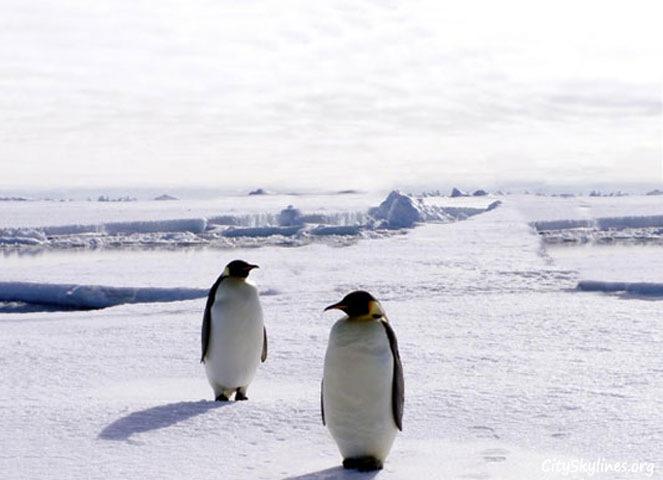 Antarctica skyline with penguins